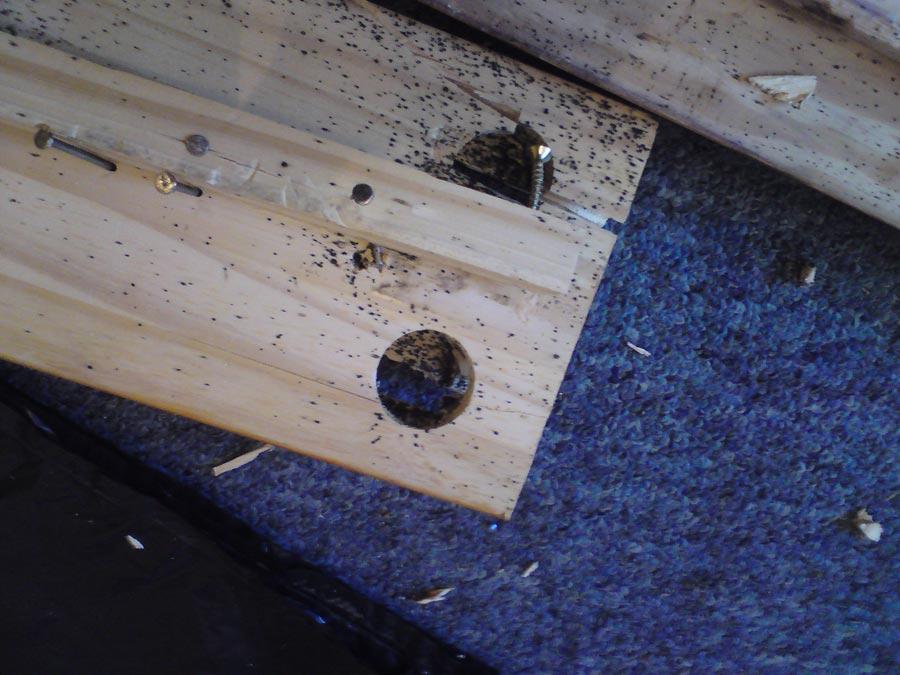 Bed Bug Control City Pest Control Brighton